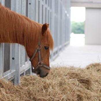 paarden rusthuis hoeve de vrijheid (10)
