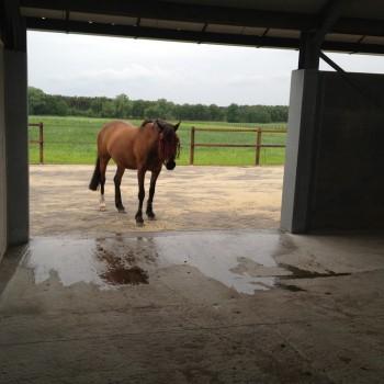 paarden rusthuis hoeve de vrijheid (2)