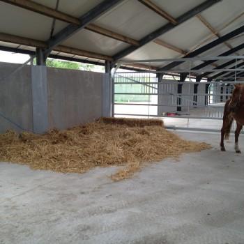 paarden rusthuis hoeve de vrijheid (3)