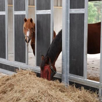 paarden rusthuis hoeve de vrijheid (7)