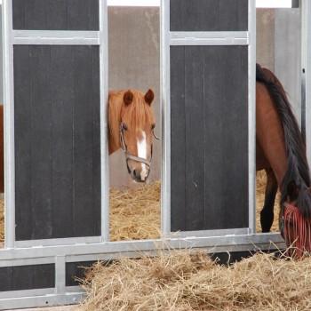 paarden rusthuis hoeve de vrijheid (8)