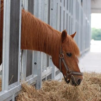 paarden rusthuis hoeve de vrijheid (9)